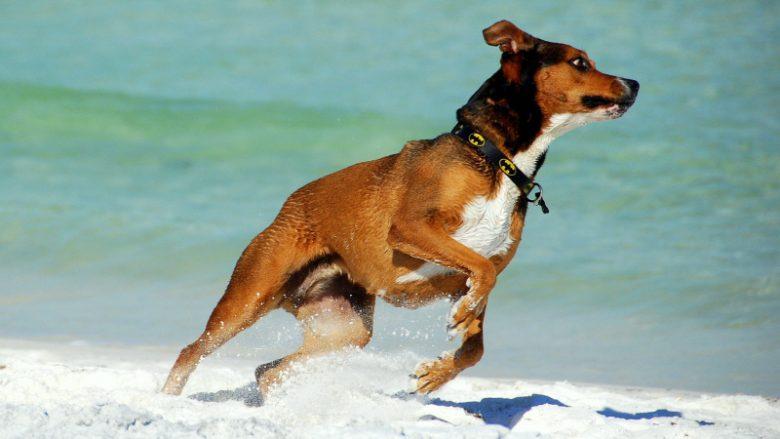 An excited dog symbolises staff motivation