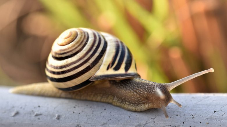 Snail to depict slow IT support